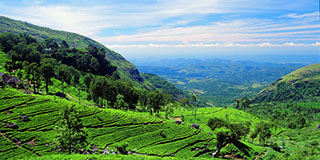How can Sri Lanka celebrate Tea Industry ignoring the lands confiscated by the Kandyan peasantry?