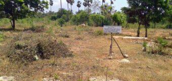 යාපනයේ යළි පිබිදෙන දෙවනපෑතිස්ස සමයේ තිස්ස මහා විහාරය –  Revival of the Tissa Maha Viharaya in Jaffna